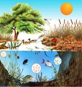 Escosistemas